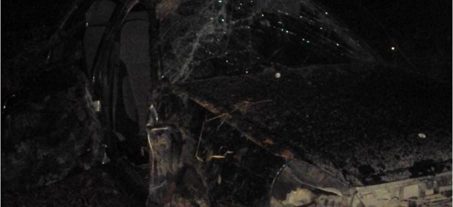В Смоленской области автомобиль столкнулся с лосем.