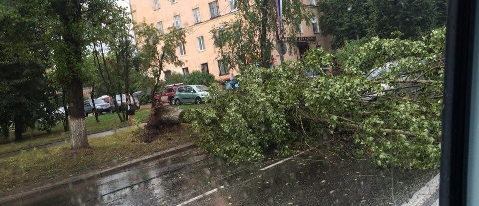 В результате не погоды в Смоленске завалилось несколько деревьев