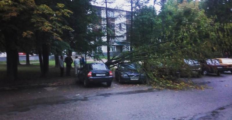 В Смоленске на припаркованную иномарку упало дерево.