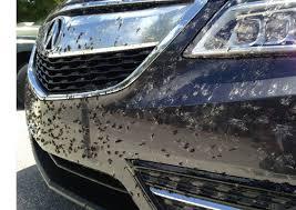 Как отмыть мошек с корпуса автомобиля