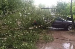 В Смоленске дерево упало на автомобили