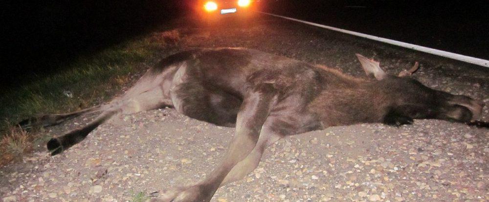Убийцы лося получили по полгода исправительных работ