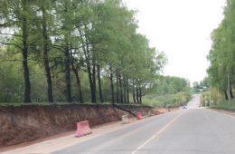 В Смоленске автомобилистов предупредили о падающих на дорогу деревьях