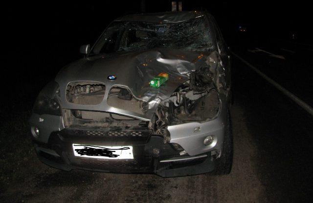 Медведь, кабан и два лося попали под колёса авто в Смоленской области