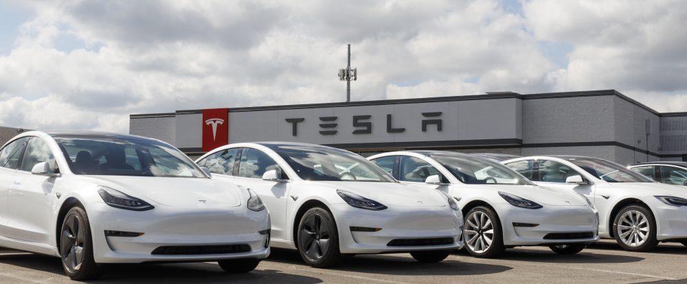 Строительство завода Tesla в Германии остановили из-за змей